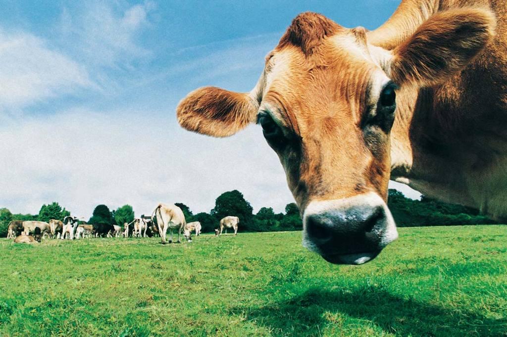 mäso živočíšne bielkoviny